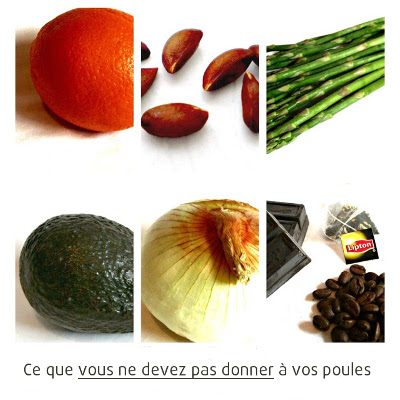 aliment interdit poule