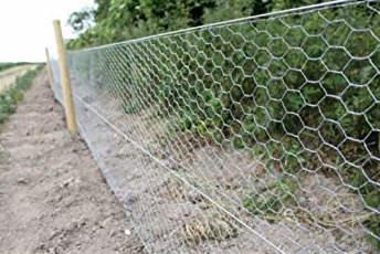 clôture poulailler